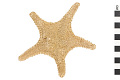 View Arctic Cushion Star digital asset number 0