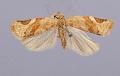 View Lophoderus coloradanus digital asset number 1