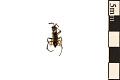 View Spider Wasp digital asset number 1