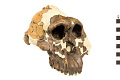 View OH 5, Fossil Hominid digital asset number 0