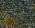 View Erythrocladia vagabunda M. Howe & Hoyt digital asset number 14