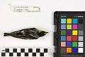 View Blackburnian Warbler, Blackburnian Warbler digital asset number 3