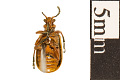 View Leaf Beetle, Leaf Beetle digital asset number 1