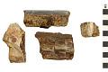 View Petrified Wood digital asset number 0