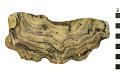 View Bryozoan digital asset number 3