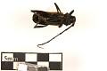 View Long-horned Beetle digital asset number 1