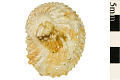 View Most Beautiful Abalone digital asset number 1