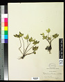 View Cheilanthes hookeri Domin digital asset number 0
