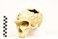 View La Chapelle-aux-Saints, Neanderthal Man, Fossil Hominid digital asset number 12