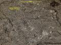 View Bacidia viridifarinosa Coppins & P. James digital asset number 3