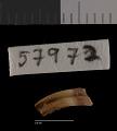 View Thomomys umbrinus zacatecae Nelson & Goldman, 1934 digital asset number 3