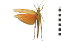 View Giant Grasshopper digital asset number 0