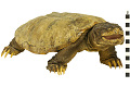View Snapping Turtle digital asset number 5
