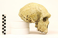 View Petralona 1, Fossil Hominid digital asset number 1