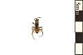 View Spider Wasp digital asset number 0