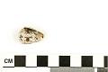 View Mollusk Egg Case digital asset number 6