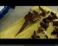 View Mesoplodon europaeus (Gervais, 1855) digital asset number 1