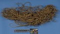 View Grass Cord Or Twine digital asset number 0