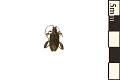 View Aquatic Leaf Beetle digital asset number 0