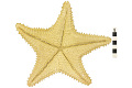 View Red Cushion Sea Star digital asset number 2