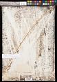 View Eleocharis macrostachya Britton digital asset number 0