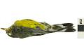 View Magnolia Warbler, Magnolia Warbler digital asset number 0