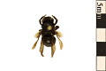 View Long-horned Bee digital asset number 0