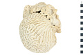 View Symmetrical Brain Coral, Smooth Brain Coral digital asset number 0