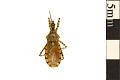 View Assassin Bug digital asset number 0