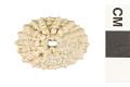 View Lister's Keyhole Limpet digital asset number 0