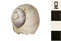View Purple Bubble Raft Snail digital asset number 5