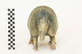 View Nine-banded Armadillo, Long-nosed Armadillo digital asset number 2