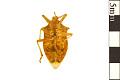 View Stink Bug digital asset number 1