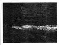 View Ziphius cavirostris Cuvier, 1823 digital asset number 6