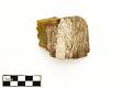 View Petrified Wood digital asset number 1