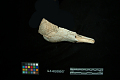 View Engraved Conch Shell Dipper Frag. digital asset number 1
