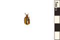 View Leaf Beetle, Leaf Beetle digital asset number 0
