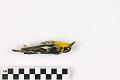 View Blackburnian Warbler, Blackburnian Warbler digital asset number 1