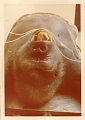 View Gorilla gorilla gorilla digital asset number 1