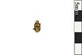 View Leaf Beetle digital asset number 0