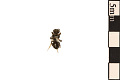 View Digger Wasp digital asset number 1
