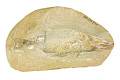 View Ray-finned Fish digital asset number 0