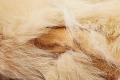View Dog Skin Mittens (1 Pair) digital asset number 4