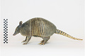 View Nine-banded Armadillo, Long-nosed Armadillo digital asset number 4