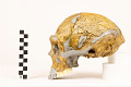 View Zhoukoudian, Early Human, Fossil Hominid digital asset number 9
