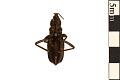 View Assassin Bug digital asset number 1