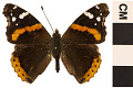 View Red Admiral digital asset number 0