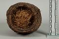 View Basket Of Manzanita Berries digital asset number 3