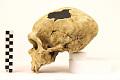 View La Chapelle-aux-Saints, Neanderthal Man, Fossil Hominid digital asset number 2