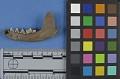 View Mustela foina digital asset number 1
